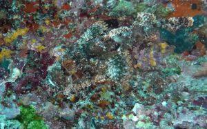 stone-fish-362089_960_720